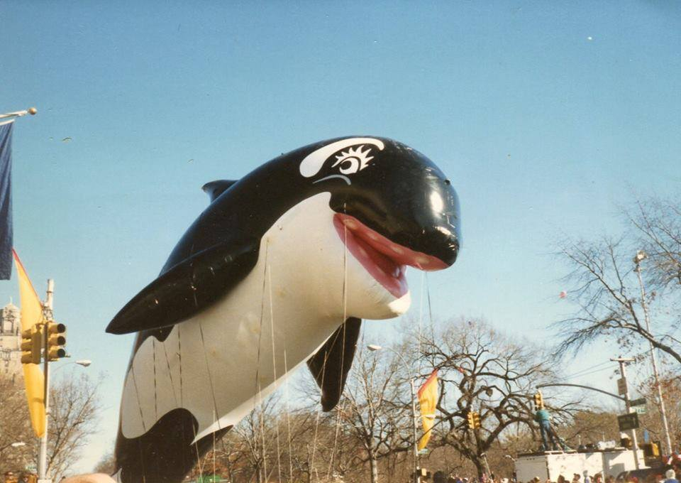 @amazing_nature0 The last time I saw an Orca that high in the air was in the late 1980's at the #MacysParade #BabyShamu