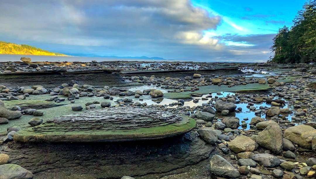 Faire de WWOOFing vous permet de visiter certains des plus incroyables endroits au Canada 🇨🇦. Vous voulez une preuve? 👇🏻  Photo : @outerislandguestfarm et les plages de l'île Hornby, C.-B.
