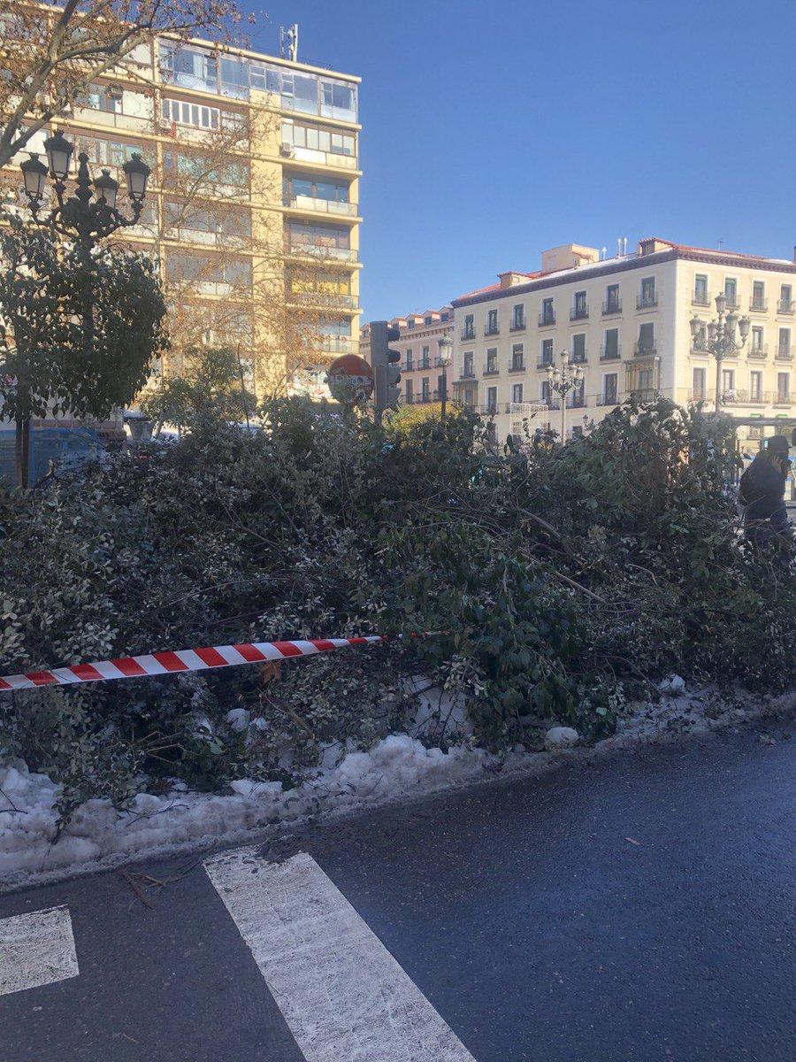 @jmdcentro si no se retiran los árboles de las aceras de Jacinto Benavente de las paradas de autobuses, ¿Como quiere Almeida que utilicemos el transporte público en Centro? #MadridBajoLaNieve