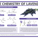 Image for the Tweet beginning: Why Can Lavender Be Used