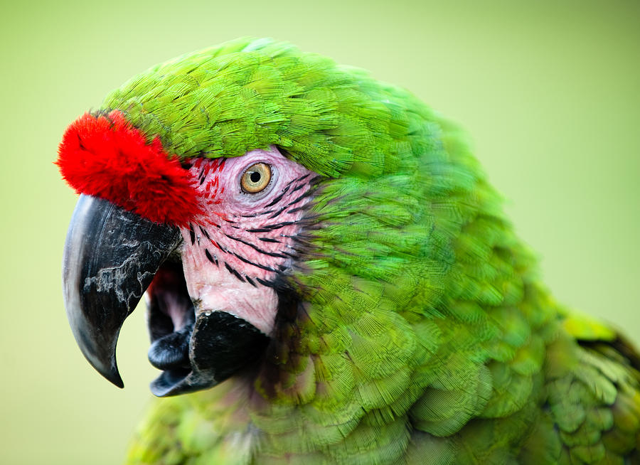 """#POTD for 01-18 """"Parrot""""  #photography #photo"""