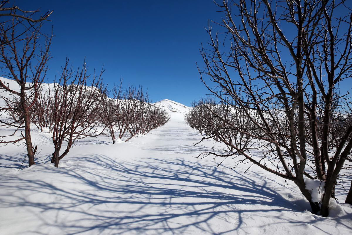 #snow #Lebanon #Snowing #StormisComing #arz #ehden #laklouk #laqlouq #faraya #kfardebian #sannine #barouk #ayn_zhalta