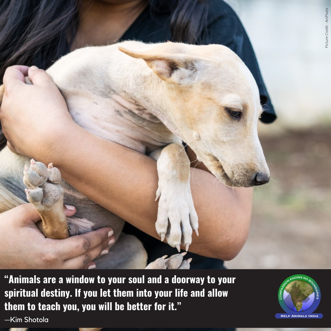 #Truth.  Love animals and want to help? Contribute to the care of the needy animals of #India and #Nepal here   #HelpAnimals #HelpAnimalsIndia  #mondaypost #mondaythoughts #mondayquotes #mondaymotivation  #motivationalmonday #motivationmonday #mondayfunday