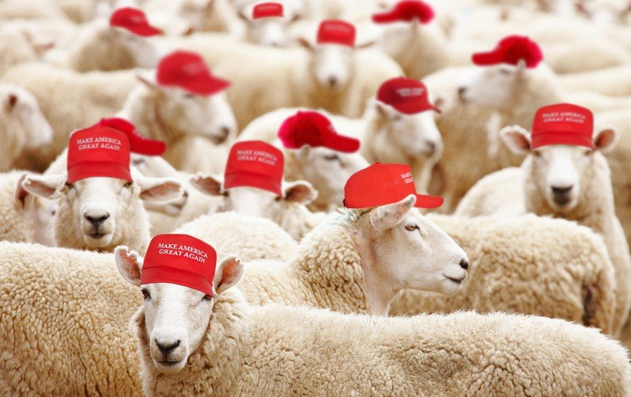 "We see clip after clip of #MAGA'ts sayin' ""I was just following Trump"" and ""I was doing what my president wanted me to do.""  Yet, they are INSULTED when called Trump's Sheepoeple. You can't have it both ways, sweeties."