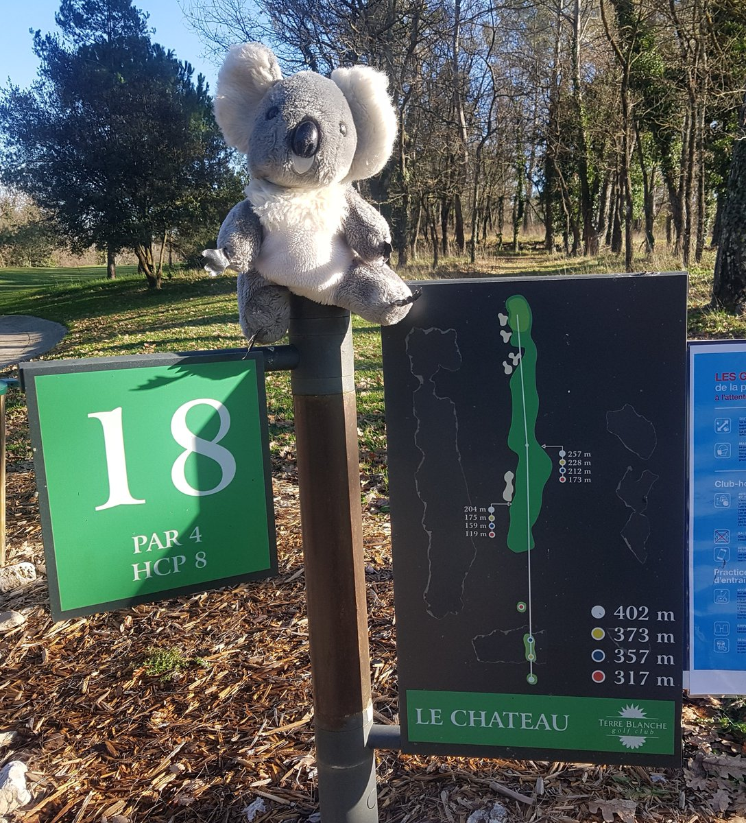 AND you just can't keep him out of the 📸with 🇦🇺🐨@ted_koala @CallawayGolfEU @CallawayTour looking super chilled out on a glorious winter's morning playing @Terre_Blanche @EuropeanTourETD   Thank you everyone @Terre_Blanche & look forward to return & play full 18 ...  Bernie ☺️