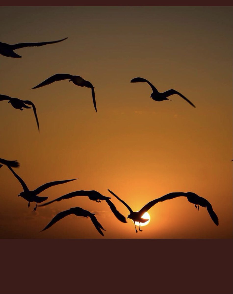 """🔴👉Photo du jour👇  """"No bird soars too high if he soars with his own wings"""".  William Blake 🇬🇧(1757-1827)poet,painter&printmaker  Photo by @Havenlust   #MLKDay ✊🏿"""