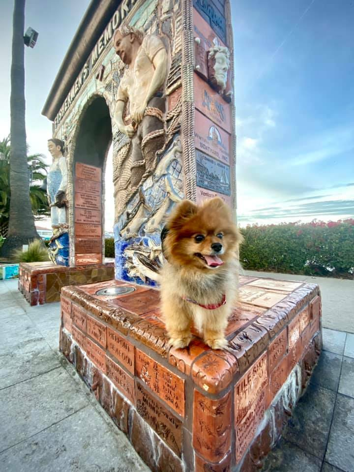 I woof the #venturaharbor so much to do! But what I really like is the alcohol spots with a nice view at the ocean 🌊 😂 😆 woof woof! 🐶🐾 #Pomeranian #abc7eyewitness #puppygram #weeklyfluff #pomstar #woofwoof #thedailypomeranian #pomeranianlife #barkshop #puppiesofig #goodm…