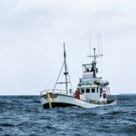 Image for the Tweet beginning: 'Researchers have identified companies fishing