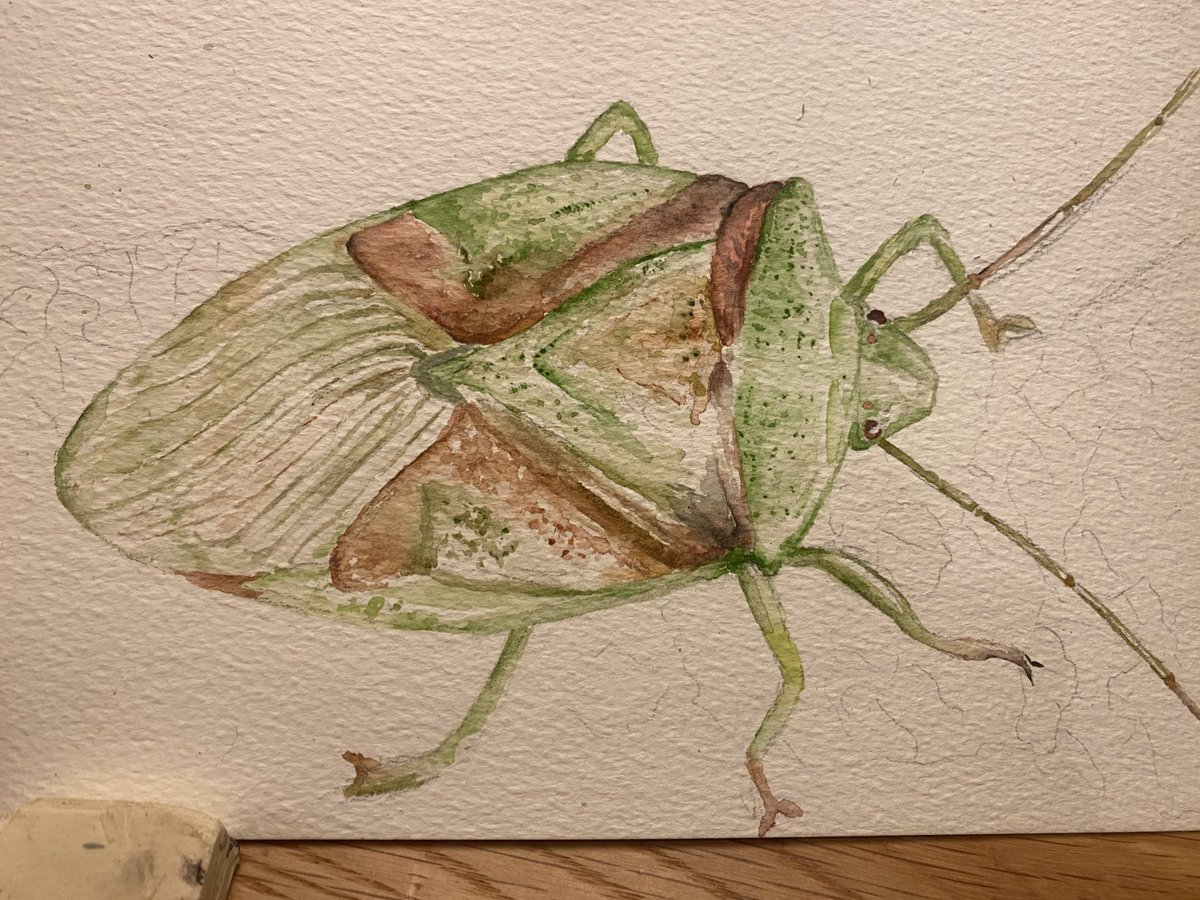 Drawing bugs to keep me sane 😂 #insects #shieldbug #loveinsects #nature #drawing