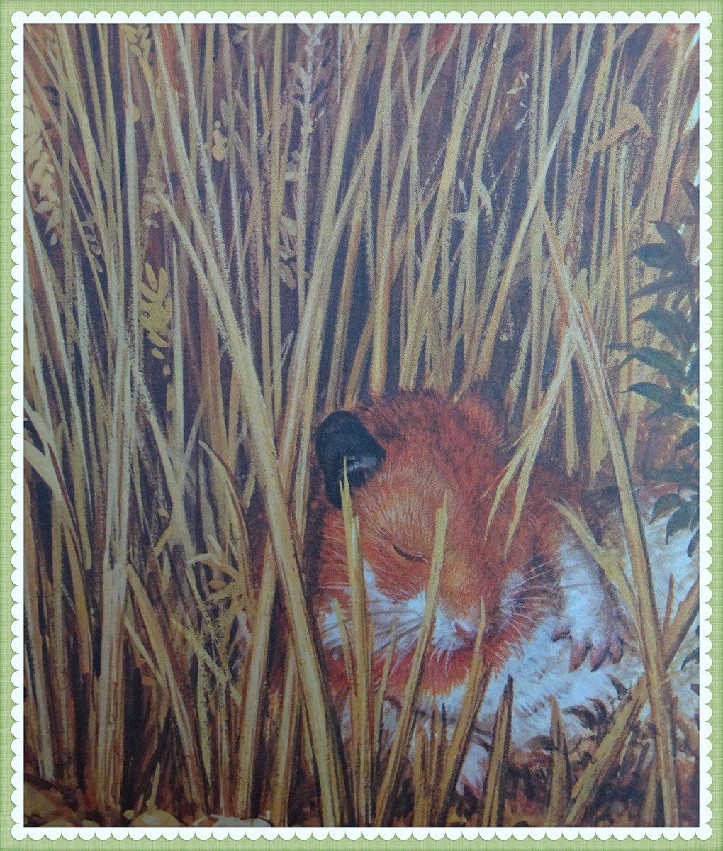 A nice sleepy #Hannibal from Hannibal on the Farm from #Ladybird #Vintagebooks