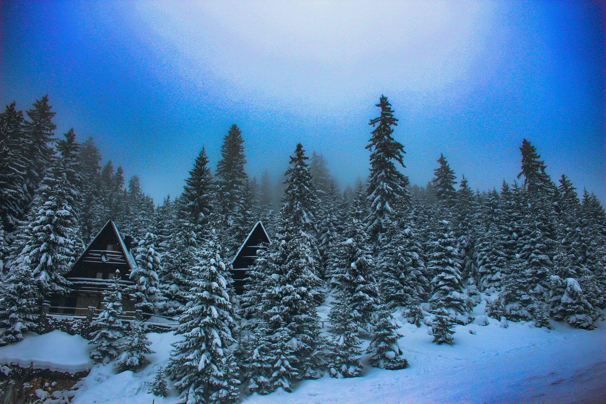#winter #winterstyle #wintervibes #wintertime #snow #snowing #snowday #snowlove #vlasic #vlašić #vlasicmountain #mountain #mountainvibes #jukaphoto  • ❄️ 📸