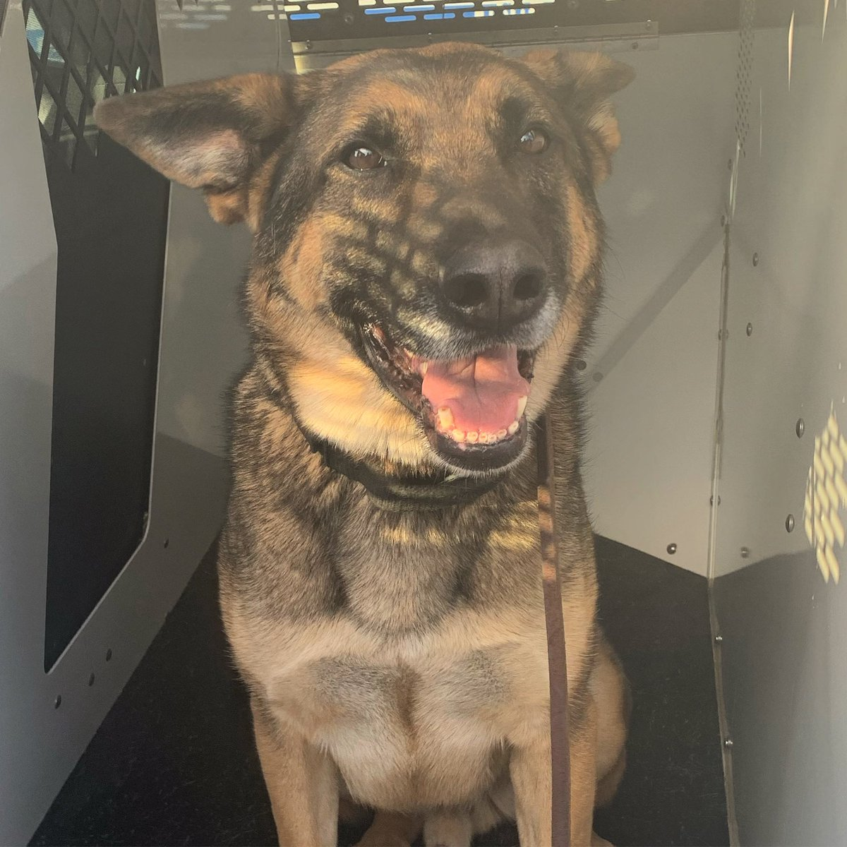 Someone was happy to be working a day shift. 🌞   #MondayMotivation #morningvibes #policek9 #policedog #LoveK9Louie #Smile