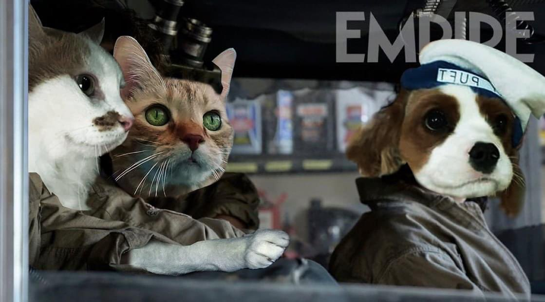 Hey, did everyone see those @Ghostbusters #Afterlife photos?  Thanks to @Gb2Magnum for making this.  @CalgaryGB @JasonReitman #CatsOfTwitter #stayfluft #margotthedestructor #GhostbustersAfterlife #cats