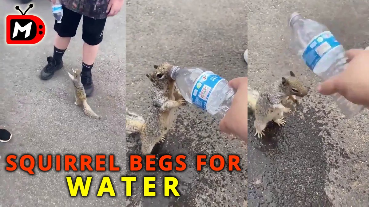 Poor Squirrel stops people begging them for water - Funny Animals, Amusing People, Exciting Videos  #funny #TryNotToLaugh #CuteAnimals #viral #viralvideo #awesome #VideoViral #animallovers #Amazing #cute