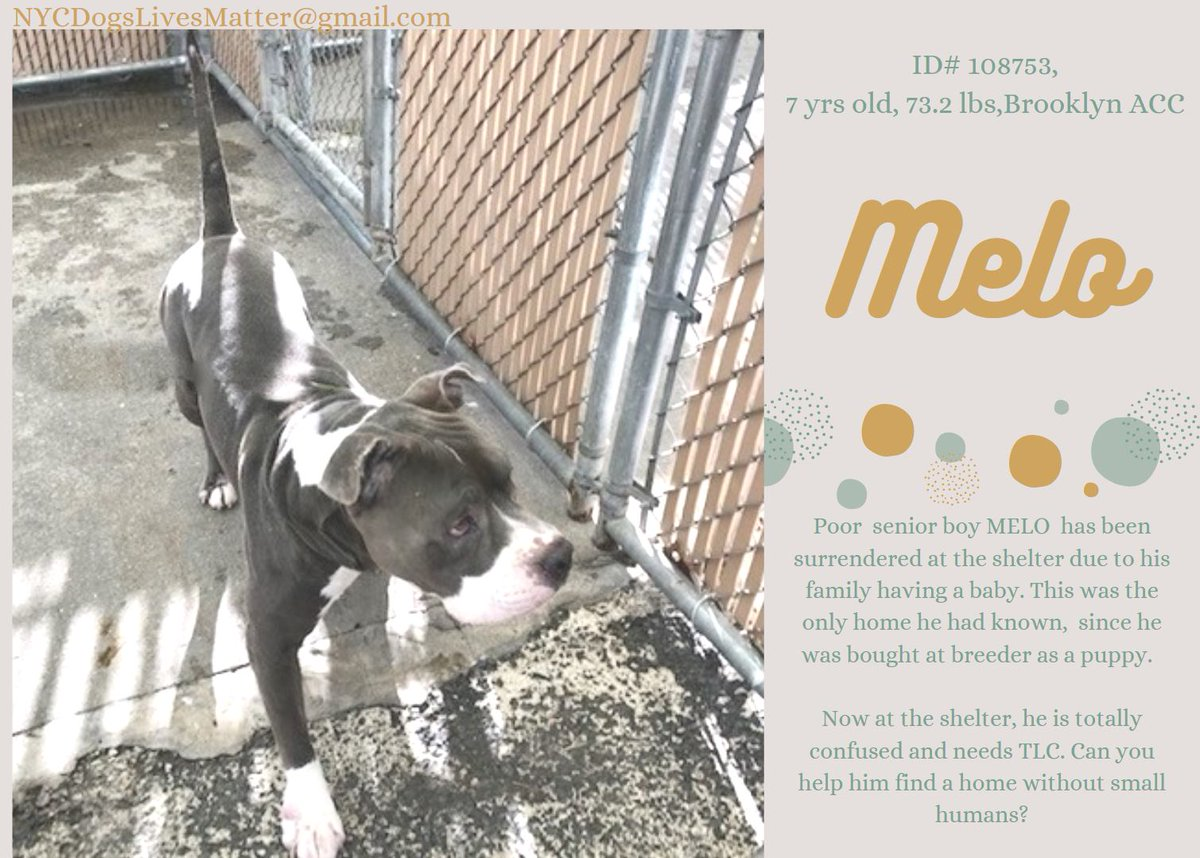 💉🆘️💉Melo💉🆘️💉 NYCACC #108753 1/21 Noon💉 Medical #Rescue Kennel Cough Easier to Kill then Treat Ultimate Betrayal Dumped after 7 Faithful Years Looks for his Family Everyday💔 #Adopt Trained Loving & Loyal Time to decompress Security & Love #Pledge #Share #Foster 4 #Rescue