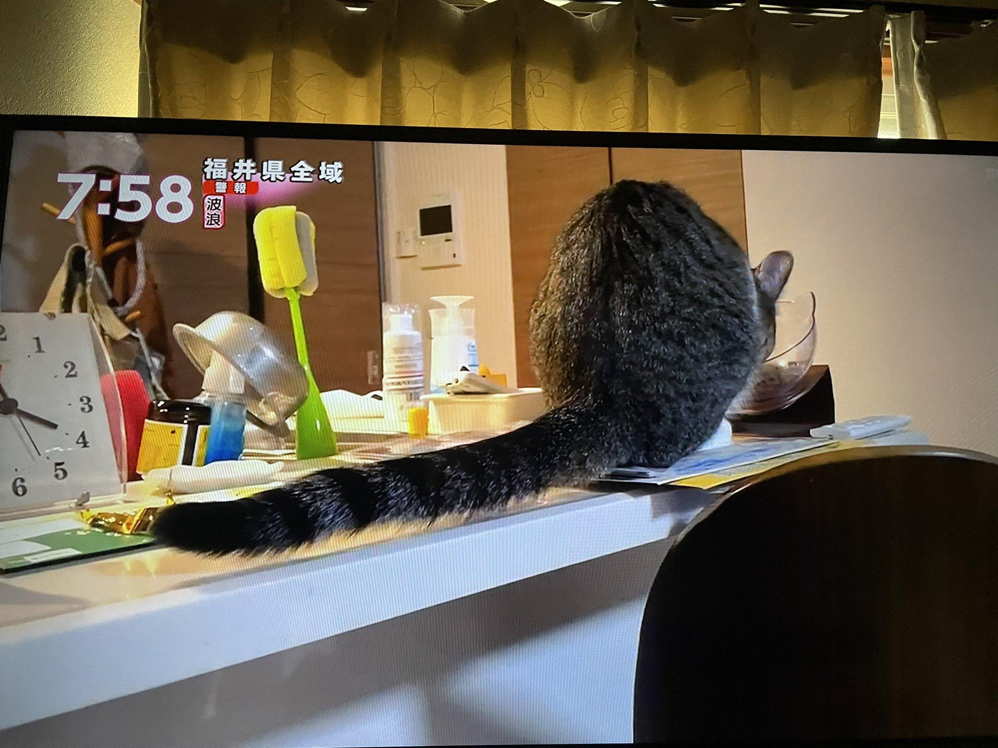 あさチャン 写真,あさチャン Twitterのトレンド - トップツイート