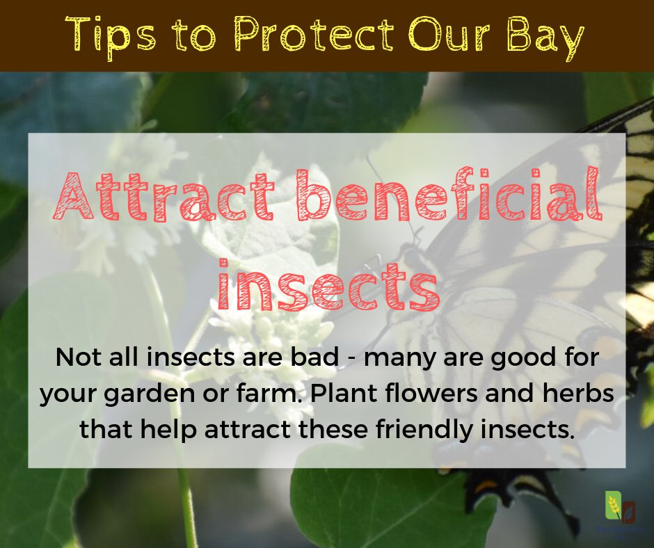 Certain plants and herbs will repel some #insects while attracting others. Choosing plants that will attract beneficial insects to your garden can help protect your #vegetables and help these insects thrive. Find more #tips from the MD Dept. of Ag here: