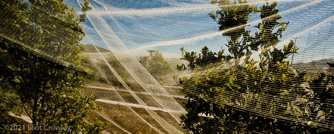 (Nothing But Net) has been published. See the whole conversation at Daily Photo Game -  editing, Lemons, netting, trees #Editing #Lemons #Netting #Trees