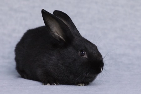 Randee is a sweet, young bunny rabbit from #ScottsValley, CA. petfinder.com/petdetail/5010…