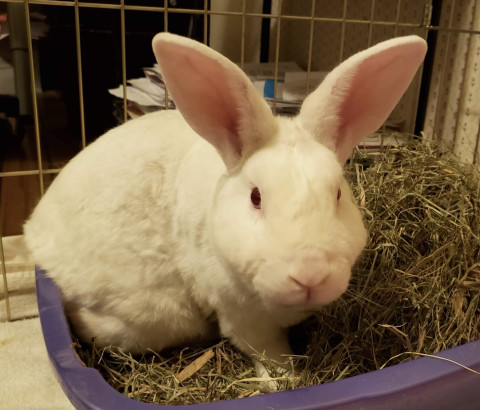 Kumo is an adult American from #Indianapolis, IN. petfinder.com/petdetail/5019…