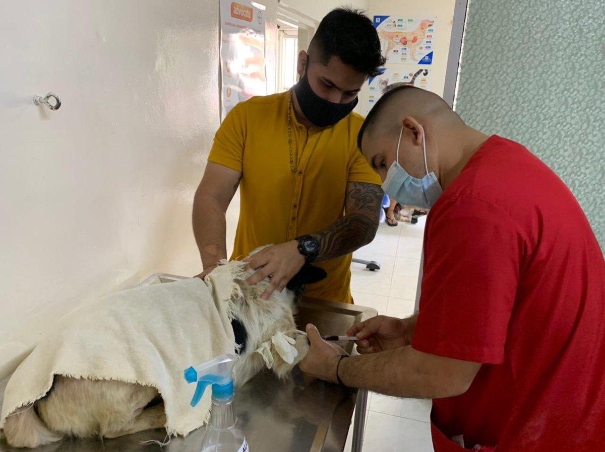#Actualización hoy se llevó veterinaria inician exámenes seguimos tarea ayudas cobijas cama vitaminas y todo lo que desee para #Dominic #Jamundi #FundacionAnimalistaSanMiguel https://t.co/3BTctxUqtj