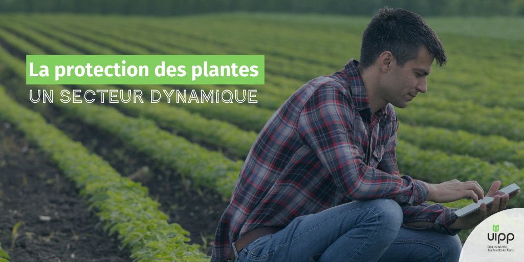 #Thread ⬇️  La #ProtectionDesPlantes, c'est un ensemble de métiers de passionnés. 🌾  Au plus près des #agriculteurs et des territoires ruraux, tour d'horizon d'un secteur dynamique, aussi et surtout en matière d'emplois 🔍  ⬇️