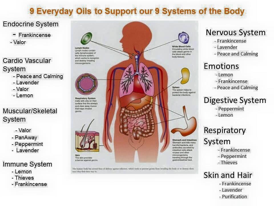 TRUE 💐LAVENDER Essential Oil | for HEALING, BEAUTY, & LOVE Botanical Name: 👾Lamiacea (Labiatae) 💜- HOLISTIC HEALTH PRACTITIONER   #skincare 🟪 #beauty #mindset #BlackOwnedBusiness #essentialoils  #meditation #Healing #lavender #lavenderoil #Wellbeing