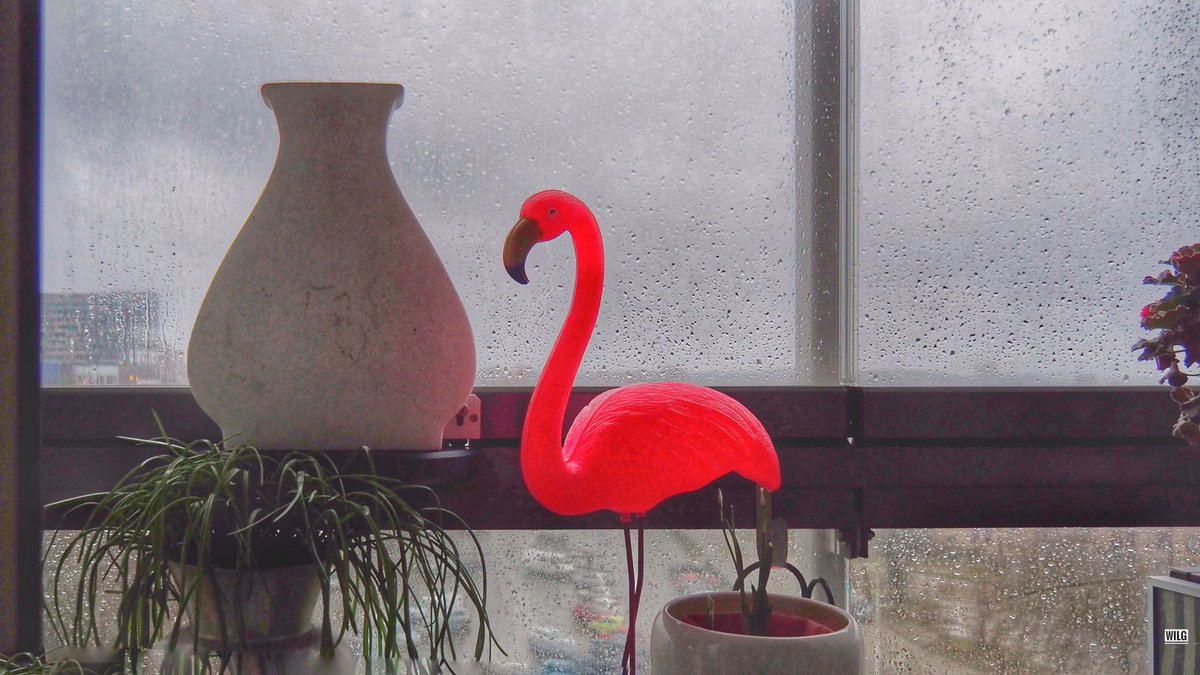 #photography #colour #flamingo #bird #rain #vase #winter #autumn #spring #summer #pink   I've been searching for some colour... think I found it