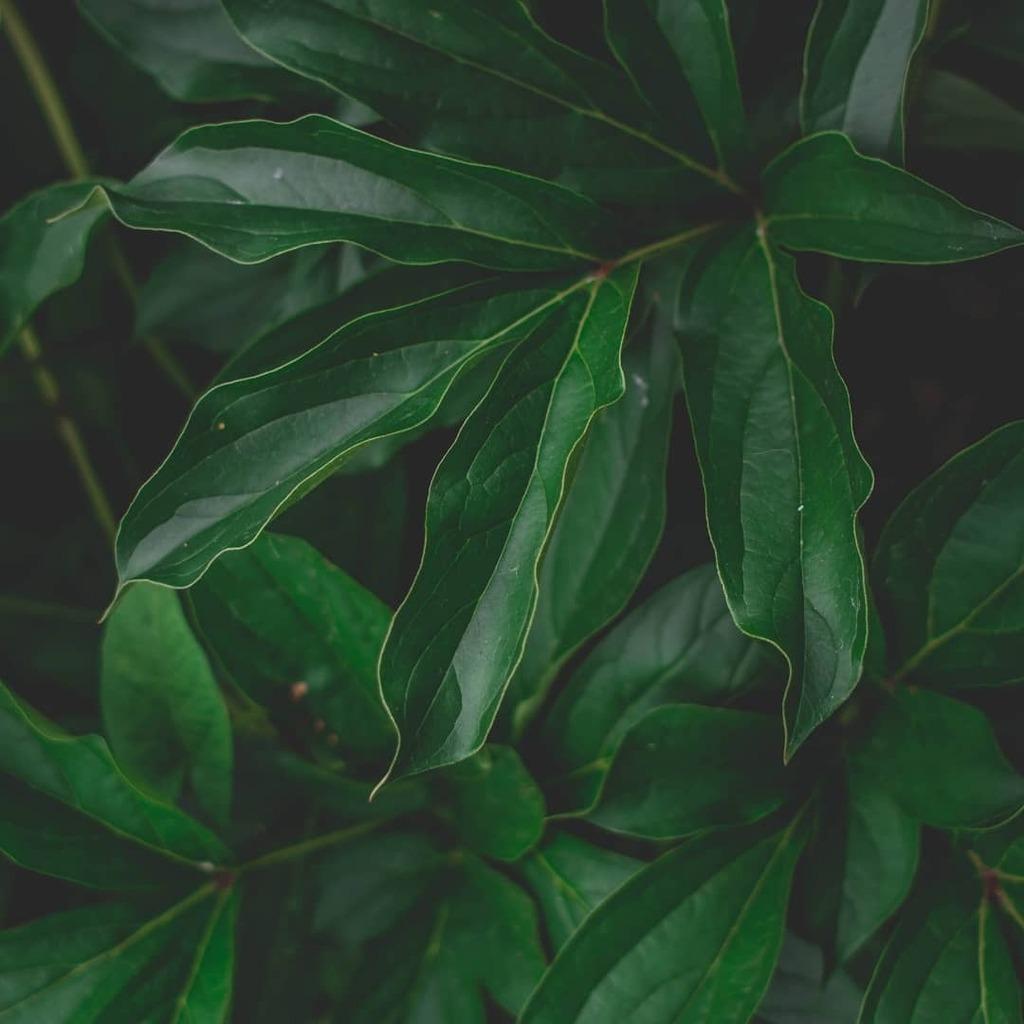 Nature * * * * * #Nature #Wellness #Wellbeing #ClearMind #Aesthetics #NatureFeelsGood #Plants #Green #NaturePhotography #PlantLover #SelfCare #NatureAddict #naturewalk