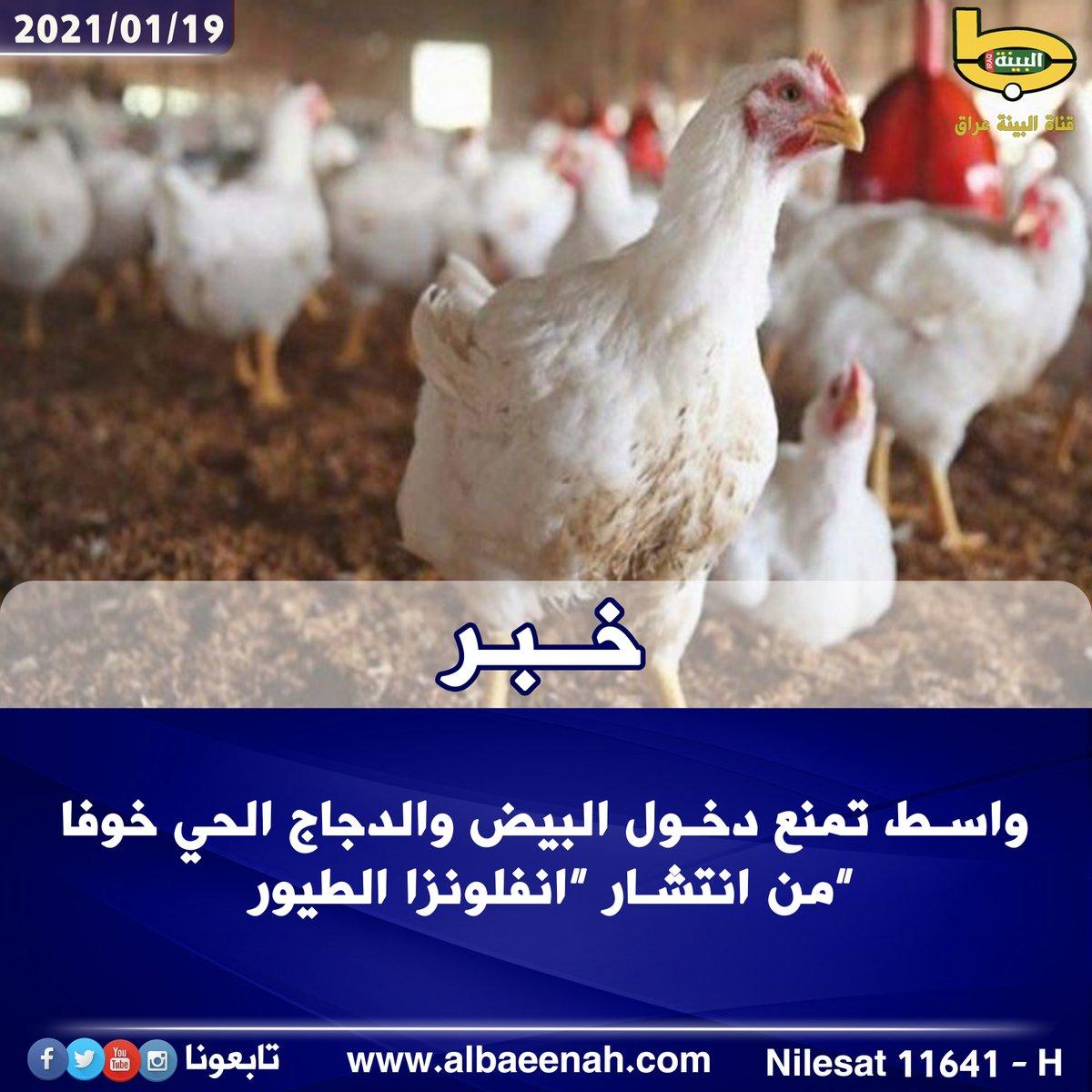 """🟩 #واسط تمنع دخول البيض والدجاج الحي خوفا من انتشار """" #إنفلونزا_الطيور """" لمزيد من التفاصيل  ــــــــــــــــــــــــــــــ لمتابعة قناة البينة عراق 11641 H NILESAT 27500"""
