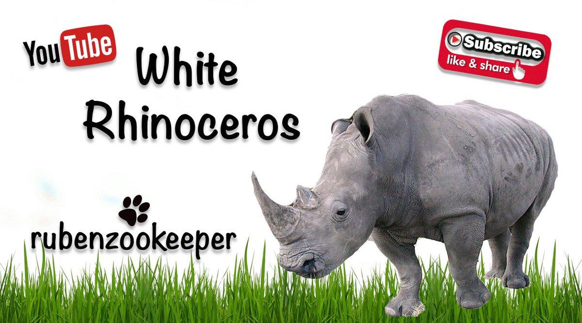 🦏 Southern White RHINO #myanimalkeeperlife #animals #zooanimals #whiterhino #savethespecies