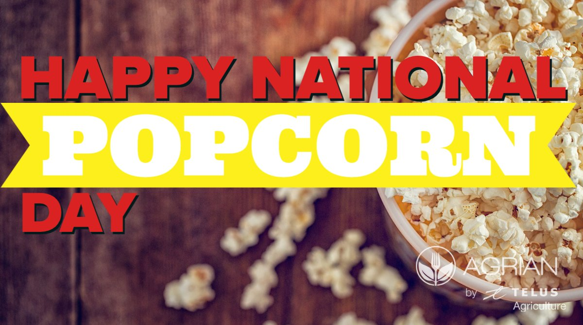 Happy #NationalPopcornDay  🍿🌽  Did you know that America consumes 15 billion quarts of popcorn annually! Top producing popcorn states include Nebraska, Indiana, Illinois, and Ohio. #popcorn #growwithagrian