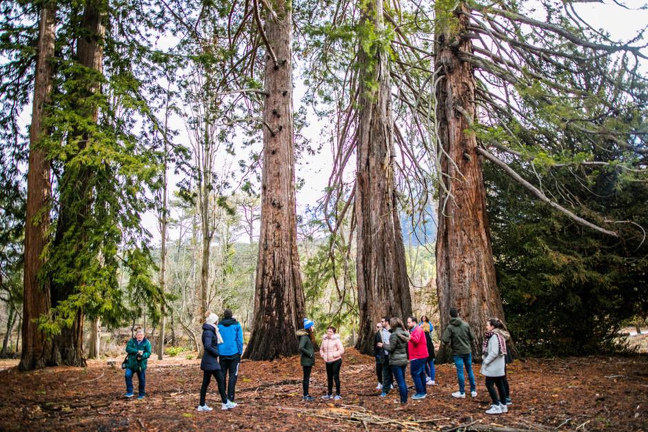 #ViveAndalucia | Las secuoyas de la Sagra, un pedacito de Yosemite en Granada  a través de @CNTravelerSpain #Granada