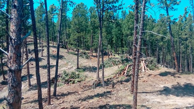 NWTF's Wyoming Cooperative Forester Austin Somerville coordinated with neighboring small-acreage landowners to design a 30-acre fuel break near Newcastle, Wyoming.