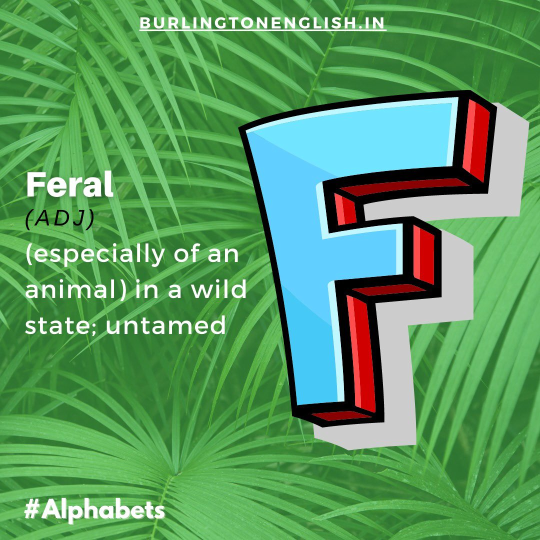 We all know that 'F' is for 'Fish', but do you know the vocabulary items in our alphabet of less common English words?  Learn more with  #Enem2020 #English #learning #vocabulary #language #common #english #tuesdaymotivations #tuesdayvibe #Trending