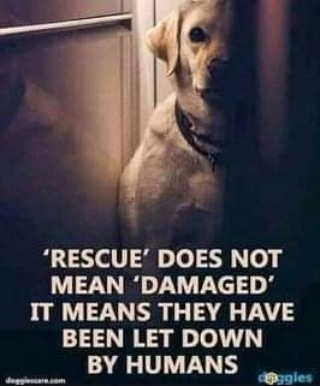 #wcgnm #newmilfordct #newmilford #livingthevolunteerspirit #gfwc #tuesday #tuesdaymorning #tuesdays #tuesdaythoughts #rescuedog #RescueDogs