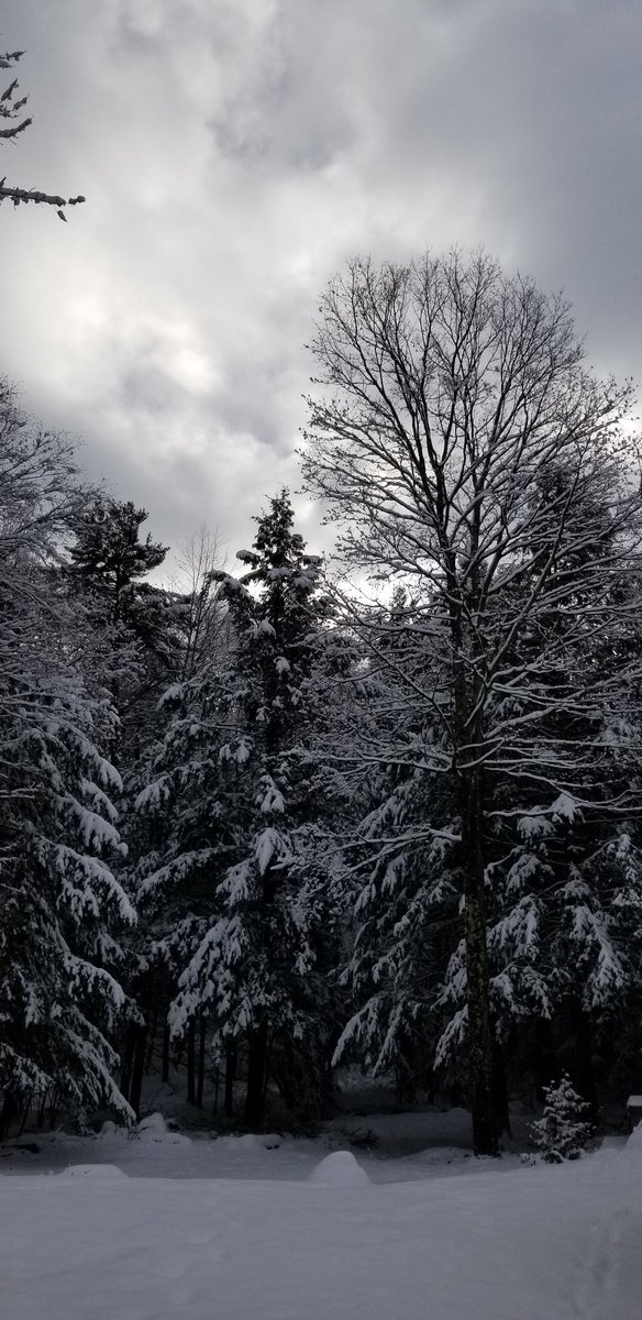 Good morning everyone happy Tuesday. I hope you have a lovely day stay safe ❤😘🥰🤗🙏😷stay warm🧣🧤 #NaturePhotography #nature #naturelovers #greysky #snowclouds #GoodMorningTwitterWorld #tuesdayvibe #beautiful #trees #snow #vermont #NewEngland #WINTER