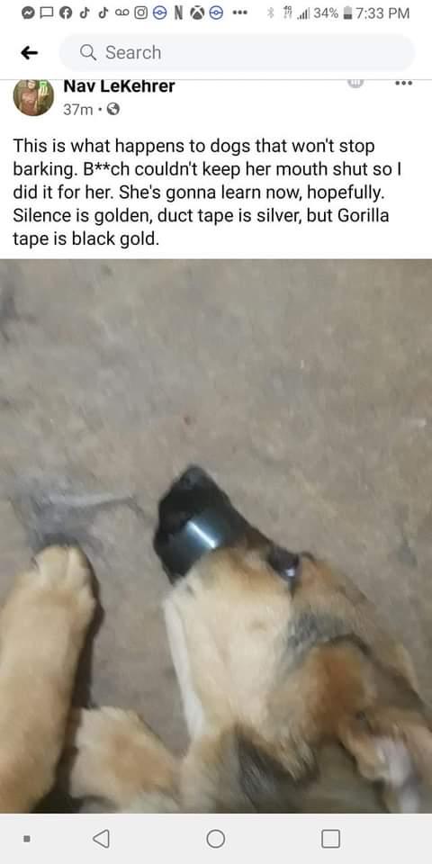 .@HumaneSociety @peta @ShastaSheriff @HavenHumaneSoc Please take a look into this extreme #AnimalAbuse #AnimalCruelty & help this dog; thank you! #California #Redding #ShastaLake Info in link: