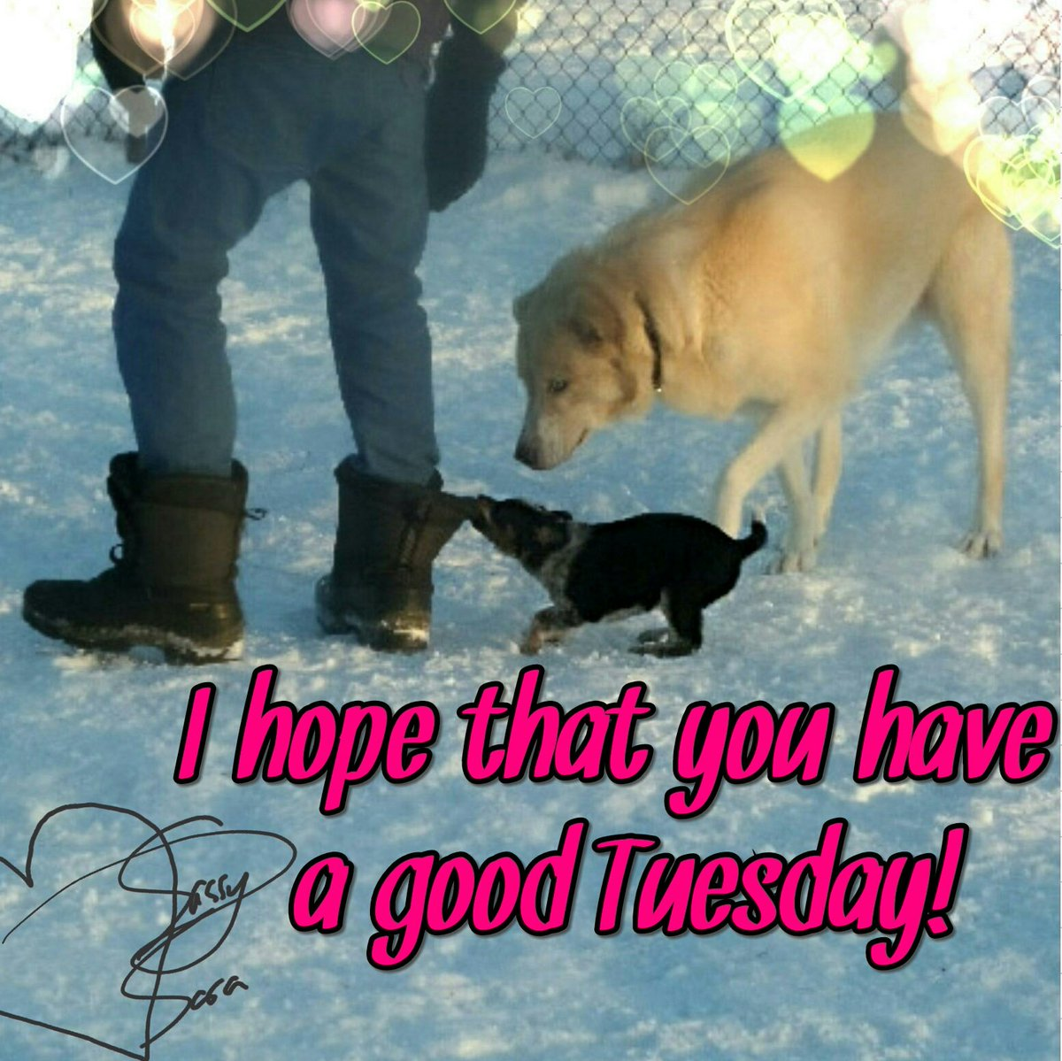 Puppy friend's forever!❤💗#tuesday #tuesdays #tuesdayinspiration #tuesdaytransformation #tuesdayvibes #tacotuesday #friends #bestfriendshit #bestfriendstatus #FriendshipGoals #puppies #puppiesoftwitter #dog #dogs #dogsoftwitter #adorable #adorableanimals #baby #babylove #cute