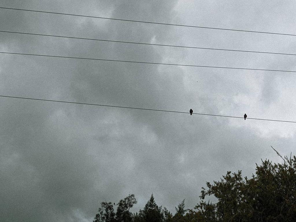 Hanging On 🐦🐦 . . . . . . @jordyjewelry #teampixel #winter  #rain #urban #city #cloudy #tree #israel #cityig #travel #travelig #quarantine #work #urbanexploration #fog #cityphotography #feelfree #vacation #holidays #cold #freezing #colorful #graffiti…