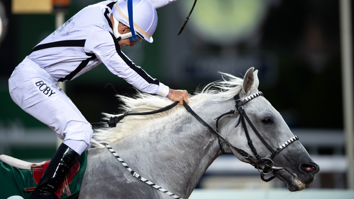 🐴 News for Arabian Racing fans! 🐴  The world's most valuable race for Purebred Arabians, the $2m Obaiya Arabian Classic, has been granted Listed status.  Part of the $30.5m eight-race card on #TheSaudiCup day - 20 Feb.  [📸 @FrusiyaClub @DougDeFelice]