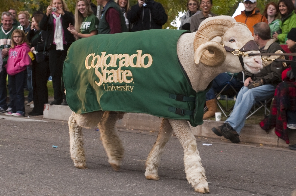 Walking into the new semester with style🐏. Here is a throwback of Cam the Ram welcoming students to campus.   Happy start to the Spring semester, Rams!!! 💛💚  #throwback #ColoradoStateUniversity #HDFSRams #SpringSemester2021 #CHHSRams