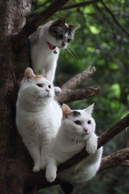 3 ตะหารเสือ! : I Love Cats And Kittens . . .  #CatMafia #Mafia #Bad #Kitty #Cute #Cat #Love #Dog #Caturday #Puppies #Relax #Relaxed #Art #Artist #Chillin #Chic #Live #Life #Soul #Spirit Xoxo