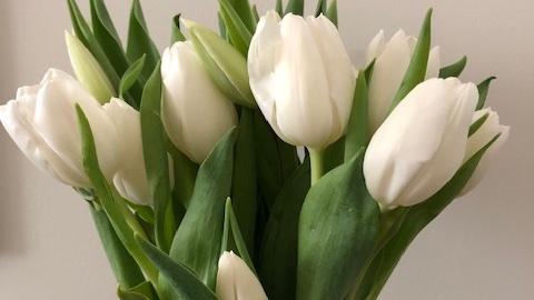 Picked up #tulips on my morning walk.  #tuesdayvibe
