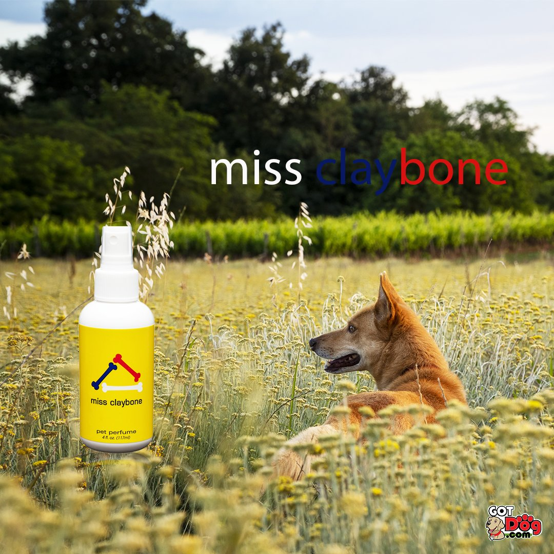 "Ms. Claybone, fashioned after ""Claiborne"" by Liz Claiborne, will have your pup smelling floral and classy!  #dogoftheday #doglover #ilovemydog #pets #puppylove #puppies #pup #instapet #doggy #doglife #adorable #doglovers #weeklyfluff #petcologne #petfragrances #fragrances"