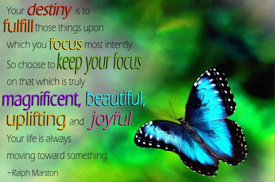 The Curious Butterfly loves this one 😉 #beautiful #Butterflies #MotivationalQuotes #Destiny #tuesdayvibe #thoughtoftheday #BeHappy #Focus #JOY #Peace #goodvibesonly
