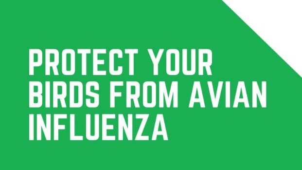 Bird keepers – register your flock to ensure you receive the latest information from DAERA. Subscribe to the Avian Influenza text service by texting BIRDS to 67300  #birdflu #birdkeepers
