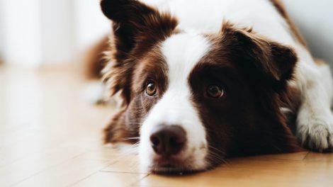 Trasloca, non può portare il cane con sé e lo uccide - https://t.co/umQhj8GpJ1 #blogsicilia #asti