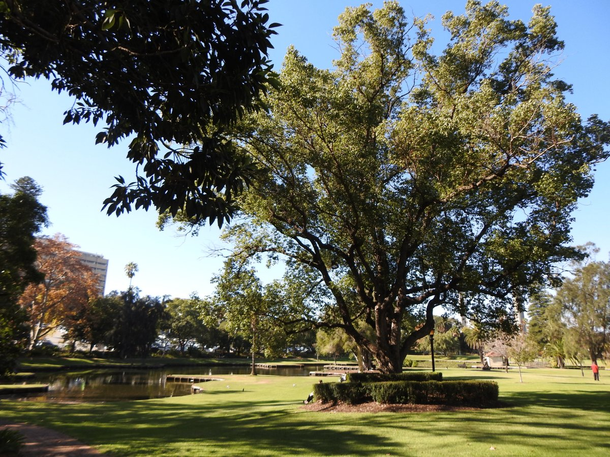 Holiday in WA! Queens Gardens Perth. 8 acres of loveliness.  Read about them here:   #ayearinperth #perthisok #visitperth #solotraveller #thetravelwomen #discoverperth #solotraveler #solotravelers #maturesolotraveler #parks