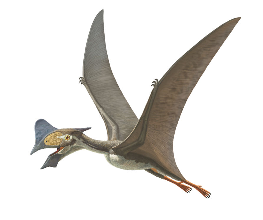 What set Tapejara wellnhoferi apart from many of its pterosaur relatives? While most pterosaurs ate meat, Tapejara's diet was likely made up of fruits and seeds. Scientists think this because its beak is rather similar to fruit-eating birds like parrots and hornbills. https://t.co/RZHcJwr6Pr